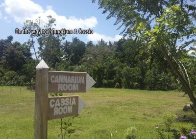 cassia cannarium